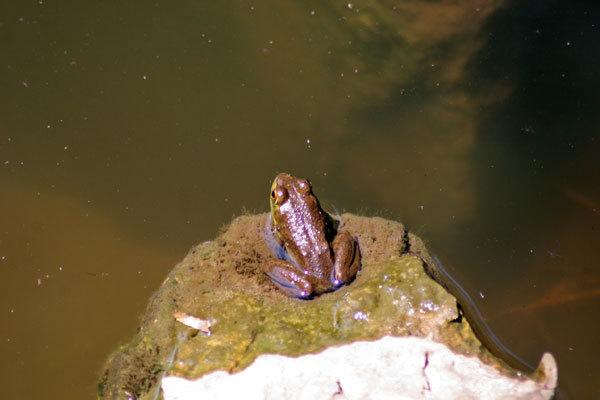 Sgfrog