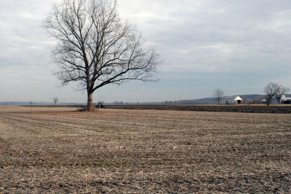 Fieldtree