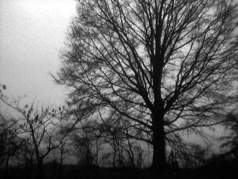 Fogtree2
