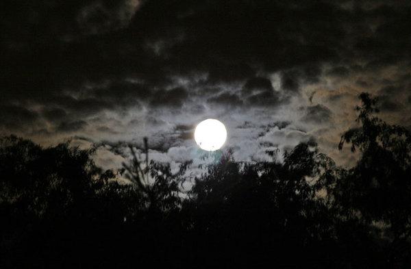 Moonfoliage